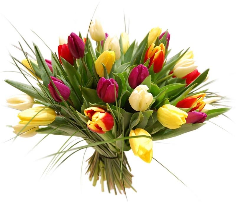 Dzień Kobiet - tulipany